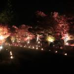 河口湖紅葉祭り(2015年)に行ってきました!