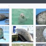 【開発日記】2019年GW中に「アザラシの写真集」のwebアプリを作ったお話