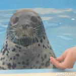 2019年6月 「名古屋港水族館」「あざらしラッシュ展 in 名古屋」に行ってきました!
