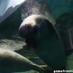 2019年7月 「アクアワールド茨城県大洗水族館」とその周辺に行ってきました!