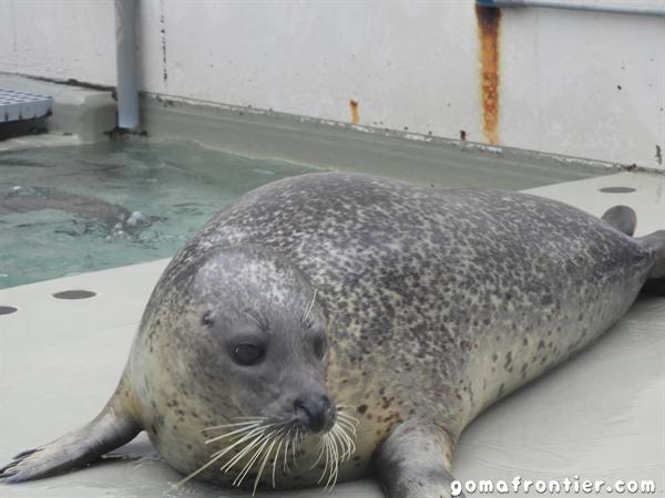 2019年12月 「須磨海浜水族園」「海遊館」に行ってきました!