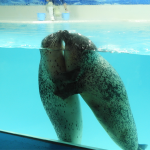 2020年1月 「下田海中水族館」「伊豆下田水仙まつり」に行ってきました!